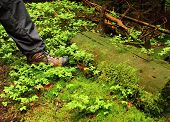 Man's Foot In The Shoe Hiking In The Green Grass In Man's Foot In The Shoe
