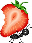 picture of ant  - Scalable vectorial image representing a ant carrying strawberry sliced - JPG