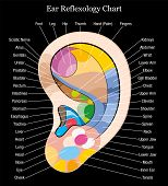 Ear reflexology chart description black