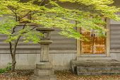 Green maple tree and leaves with japanese style building at Osaka, Japan.