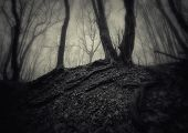 Halloween scene in a mysterious dark forest with trees with twisted roots