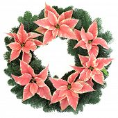 Poinsettia flower wreath with fir over white background.