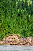 Deforested Cut Tree Wood In Forest