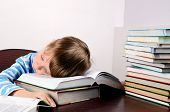 Little Boy Sleeping On Books