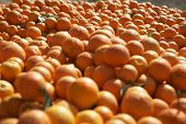 Pile of oranges in farm