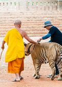 Buddist monk with Bengal specimen at the Tiger Temple, Thailand