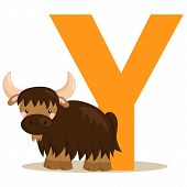 stock photo of yaks  - the letter y for the animal yak - JPG