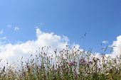Grass And Flowers With The Clouds And Sky In The Background