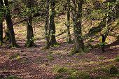 Isle Of Ulva, Undergrowth