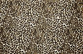 stock photo of leopard  - Brown and white color leopard print background - JPG