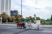 VIENNA, AUSTRIA-July 4: a horse and carriage carries tourists on JULY 4, 2014 in Vienna, St. Stephen