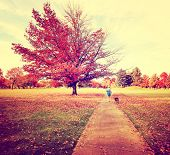 a woman walking with her pit bull in a park on an autumn day toned with a retro vintage instagram fi
