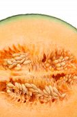 image of cantaloupe  - close up of ripe cantaloupe melon on white background - JPG