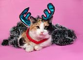 Tricolor Cat Christmas Decorations Lying On Pink