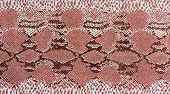 Texture Of Print Fabric Striped Snake Leather