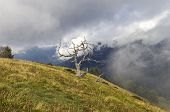 Mountain Landscape With Dead Tree. Alps, Italy