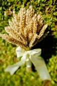 Spikelets Of Wheat In A Bouquet Laying On The Grass