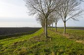 Trees along a ploughed field in winter