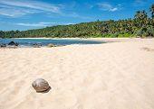 Beach With Coconut.