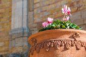 Terracotta Vase