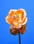 Gold Rose Macro
