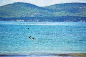 Cormorants On The Water
