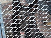 Dog In Cage At Animal Shelter