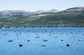 Oyster Farm And Island In Adriatic Sea Near Dubrovnik