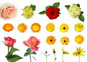 Set Of Different Isolated Flowers