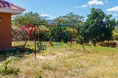 Swing For Kids In Garden