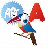A is for vector cute cartoon isolated Arasari bird