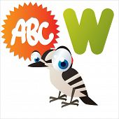 W is for vector cute cartoon isolated Woodpecker