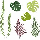 picture of fern  - Fern and monstera silhouettes - JPG