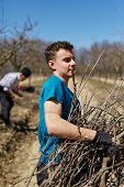 picture of spring-cleaning  - Grandson help his granpa cleaning the orchard after the pruning activity - JPG