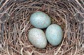pic of bird egg  - bird - JPG