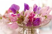 image of sweet pea  - Bouquet of beautiful sweet peas flowers - JPG