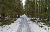 stock photo of dirt road  - Forest dirt road in early spring - JPG