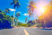 stock photo of tree lined street  - Nice asfalt road with palm trees against the blue sky and cloud - JPG
