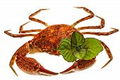 stock photo of crab  - Cooked crab isolated on white background Cooked crab isolated on white background - JPG