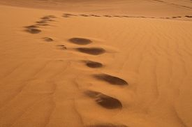 stock photo of barchan  - footprints on sand dune in Rub  - JPG