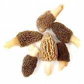stock photo of morels  - Group of one yellow and five gray morel mushrooms  - JPG