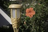 Tiki Light And Red Flower