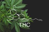 Thc Formula, Tetrahydrocannabinol . Despancery Business. Cannabinoids And Health, Medical Marijuana, poster