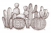 Hand Drawn Cactus. Western Desert Cacti Mexican Plants In Sketch Style Vector Illustration. Cactus M poster