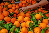 Oranges On Sale On A Market Stall, With An Arm And Hand Reaching In To Pick A Choice Orange. Big Sel poster