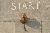 Start, 2020 New Year Of The Rat. Top View Of Start Text And Rodent Sitting And Looking Forward poster