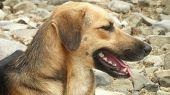 Faithful dog - Friend of Man