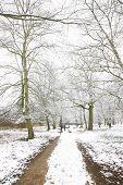 Winterlandschaft von Richmond park