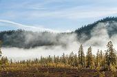 Forest Mist, Pine Trees In Fog, Forest Mist, Pine Trees In Fog, poster
