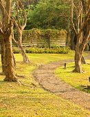 Path in a Peaceful Landscape Garden